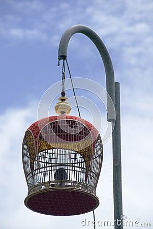 Uccello canoro
