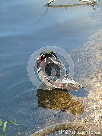 Uccello del lago