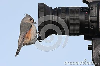 Uccello su una macchina fotografica