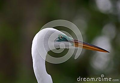 Uccello tropicale in una sosta in Florida