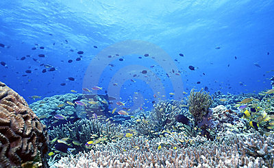 Uepi Shallow Reef