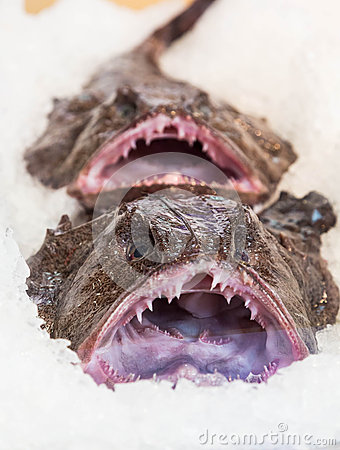 Free Ugly Fish Stock Photo - 49616360