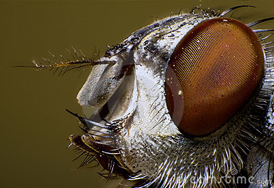 Ugly fly portrait