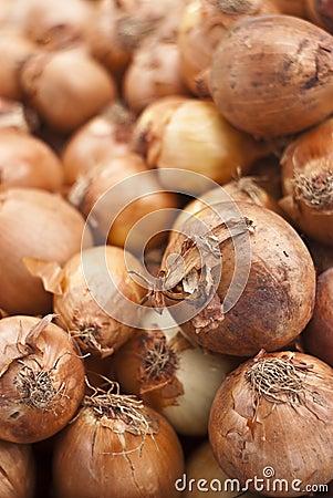 De achtergrond van uien