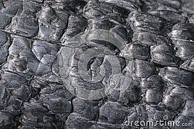 Uitgebrande boom