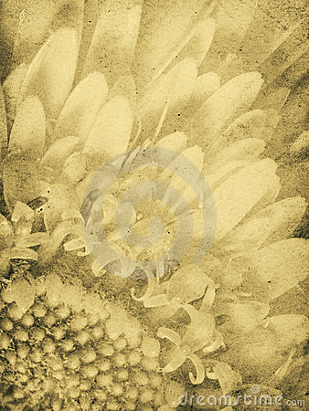 Uitstekende Daisy Imprint