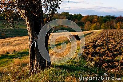 Ukrainian Countryside Landscape