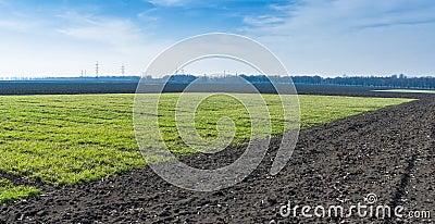 Ukrainian landscape with winter crops