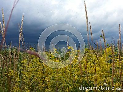 Ukrainian nature