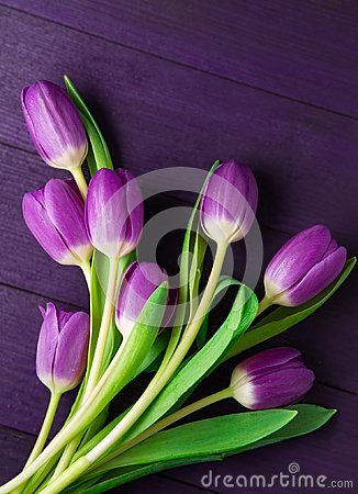 Free Ultra Violet Tulips On Ultra Violet Background Royalty Free Stock Image - 112150736