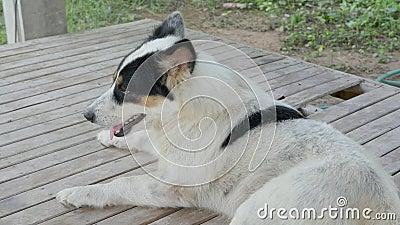 Um Cachorro Sujo Deitado video estoque
