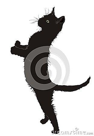 Um gato