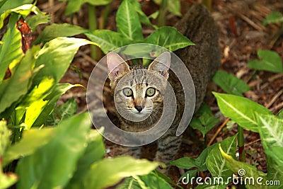 Um gato pequeno