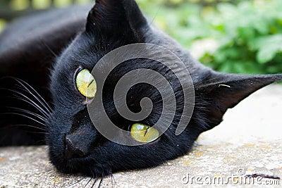 Um gato preto