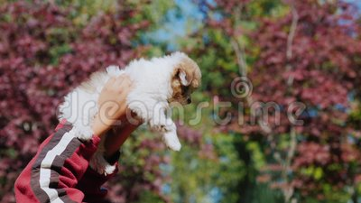 Um homem está jogando com um cachorrinho As mentiras e mantêm-no acima dele, simplesmente as mãos com o animal de estimação são v video estoque