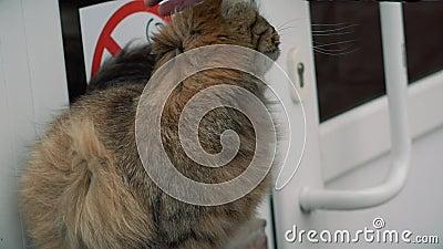 Um homem que afaga um gato filme