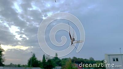 Um inseto está preso numa teia de aranhas video estoque