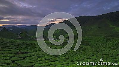 Um lapso de tempo do nascer do sol na plantação de chá de Cameron Highland Malaysia video estoque