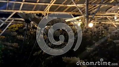 Um lugar a importar-se com plantas na noite Jardinagem com luzes video estoque