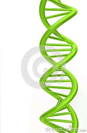 Um modelo da costa do ADN