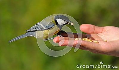 Um pássaro real na mão