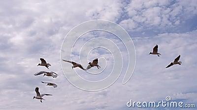 Um rebanho das gaivotas e de um vento contrário filme