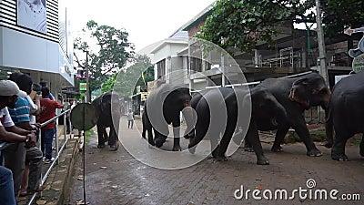 Um rebanho dos elefantes video estoque