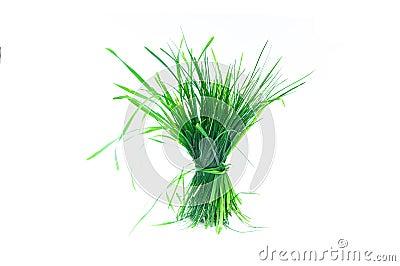 Um topete da grama