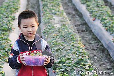 Uma morango da colheita do menino