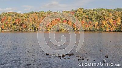 Uma paisagem média disparada de cores máximas do outono ao longo do rio Mississípi poderoso nas cidades geminadas 4K TImelapse video estoque
