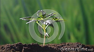Uma planta bonita nova da mão uma árvore em uma atmosfera natural e mágica romântica vídeos de arquivo