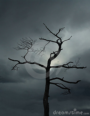 Umarłe drzewo