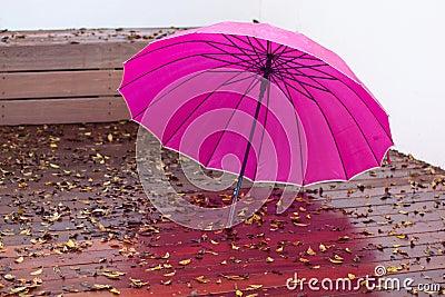 Umbrella after the rain