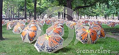 Umbrellas on Grass
