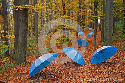 Umbrellas in the wood