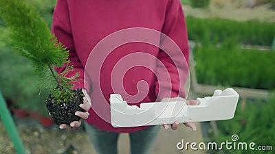 Umweltverschmutzung oder Umweltbelange Die Wahl liegt bei Pflanzen oder Kunststoffen. Das Mädchen hält ein Sedling und stock footage