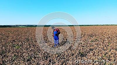 Un agricoltore controlla le colture in un campo asciutto video d archivio