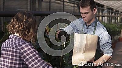 Un alto venditore caucasico in grembiule sta mettendo insalata fresca, carote in sacchetto di carta per acquistare al mercato del stock footage