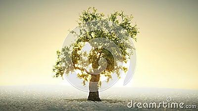 Un arbre s'élevant sous le Soleil Levant illustration de vecteur