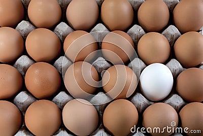 un-blanc-d-oeuf-dans-les-oeufs-bruns-minorit%C3%A9-visible-17707566 enfouissement