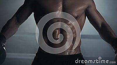 Un boxeur masculin montre une presse et des muscles Fin vers le haut Fond de ring Athl?te nu posant sur la cam?ra banque de vidéos