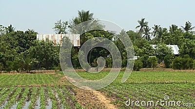 Un campo cultivado y casas rústicas almacen de metraje de vídeo