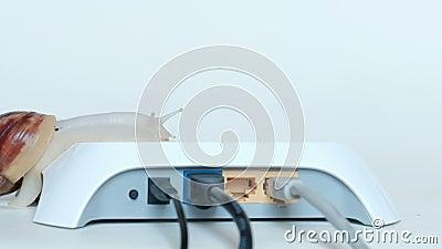 Un caracol grande se arrastra lentamente sobre un router blanco con los alambres Velocidad de Internet y transferencia de datos l almacen de metraje de vídeo