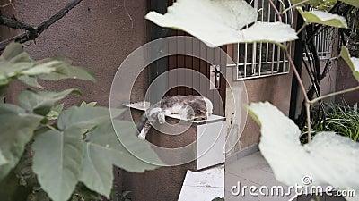 Un chat paresseux dort sous des grappes de raisins banque de vidéos