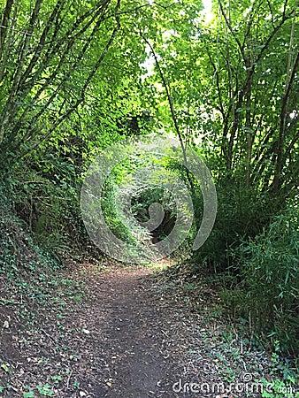 Un chemin dans le bois photo stock image 64454795 - Un matin dans les bois ...