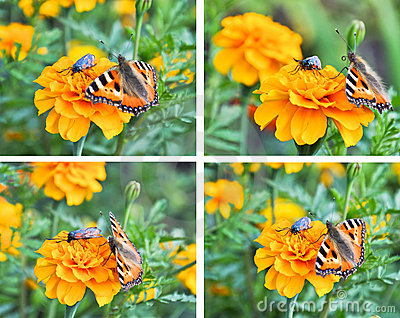 Un collage de mariposas