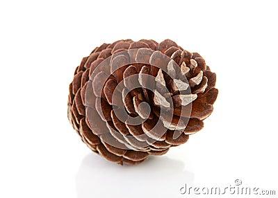 Un cono del pino