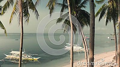 Un drone, lanciato lentamente, vola tra palme e palme e apre il panorama sulla palma e sulla spiaggia di sabbie con barche archivi video
