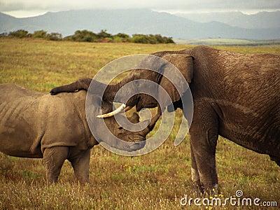 Un elefante y un rinoceronte