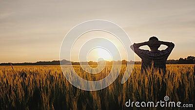 Un fermier prospère regarde son champ de blé au coucher du soleil clips vidéos